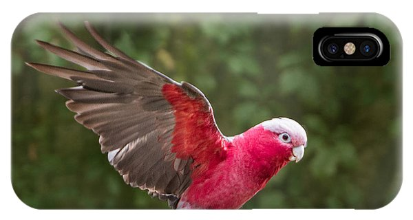 Australian Galah Parrot In Flight IPhone Case