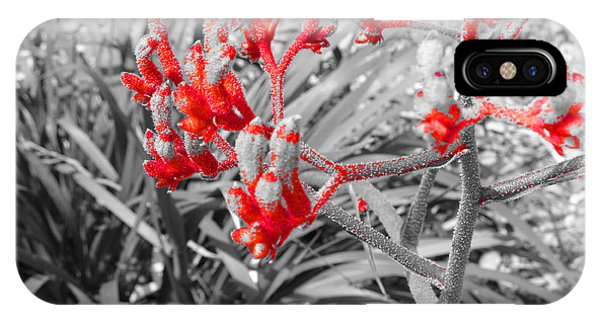 Australian Kangaroo Paws In Kings Park - Perth IPhone Case