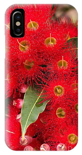 Australian Red Eucalyptus Flowers IPhone Case