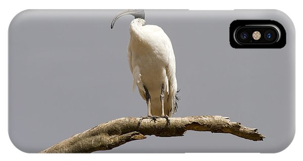 Ibis iPhone Case - Australian White Ibis Perched by Mike  Dawson