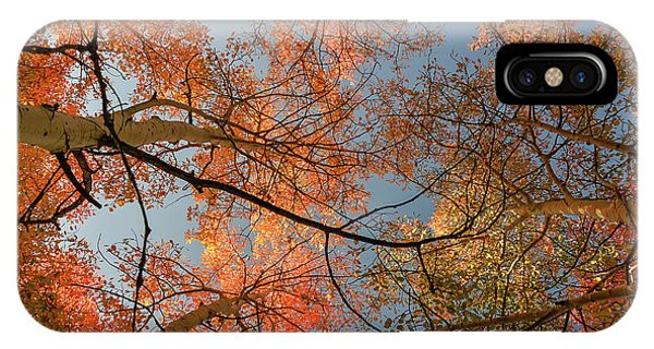 Autumn Aspens In The Sky IPhone Case