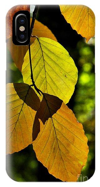 Autumn Beech Tree Leaves IPhone Case