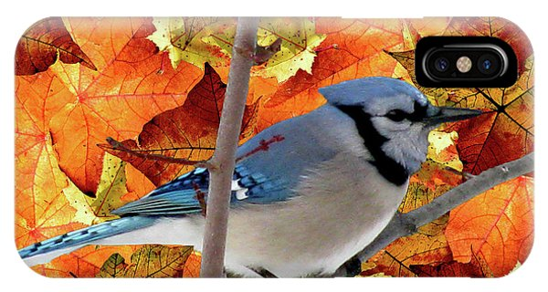 Autumn Blue Jay IPhone Case