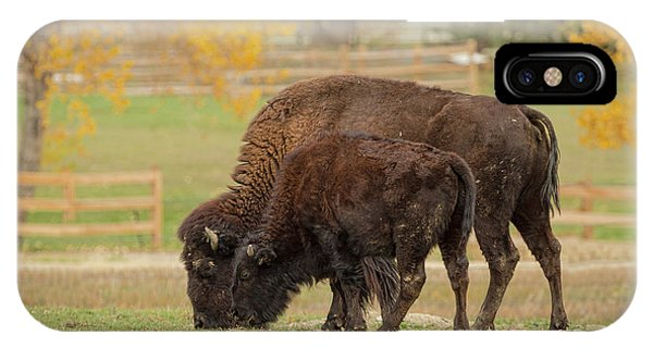 Autumn Buffaloes Cow And Calf IPhone Case