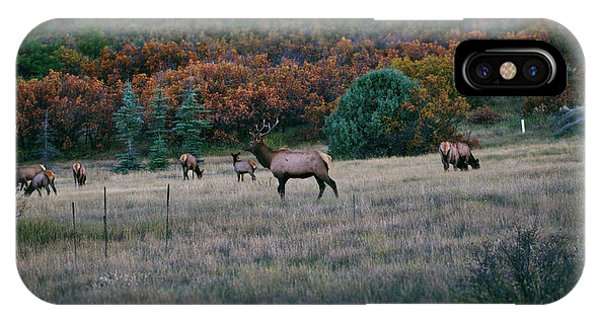 IPhone Case featuring the photograph Autumn Bull Elk by Jason Coward
