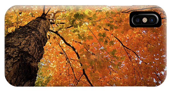 Autumn Canopy In Maine IPhone Case