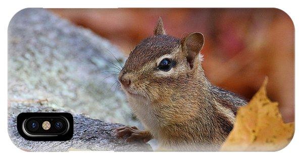 Autumn Chipmunk IPhone Case