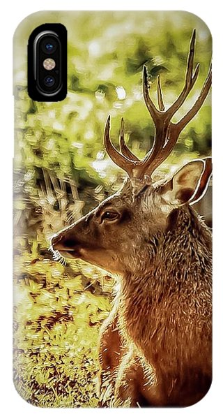 IPhone Case featuring the photograph Autumn Colours Stag by Cliff Norton