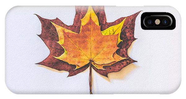 Leaf iPhone Case - Autumn Fire by Kate Morton