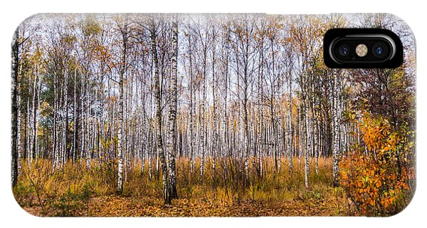Autumn In The Birch Grove IPhone Case