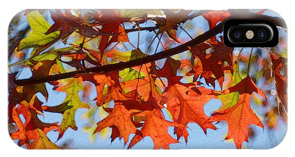 Autumn Leaves 16 IPhone Case
