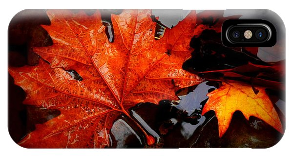 Autumn Leaves In Tumut IPhone Case