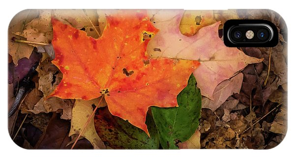 Somerset County iPhone Case - Autumn Love by Terry DeLuco