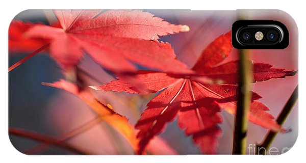 Autumn Maple IPhone Case
