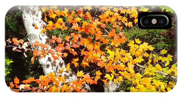 IPhone Case featuring the photograph Autumn Maple by Barbara Von Pagel