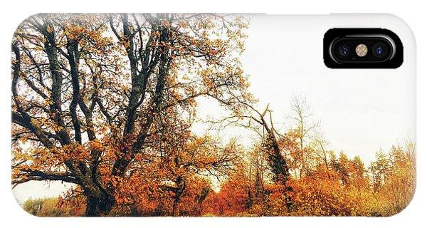 Autumn On White IPhone Case