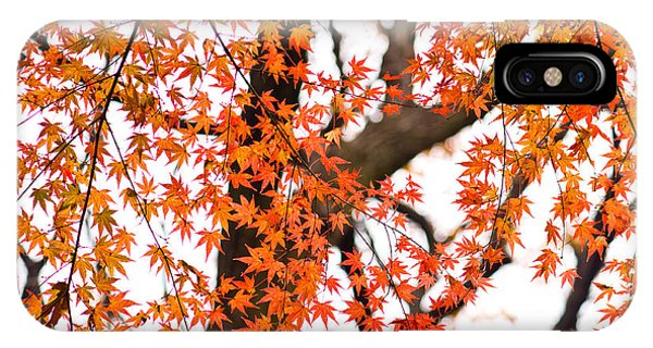 Autumn Red Leaves On A Tree   IPhone Case