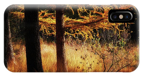 IPhone Case featuring the photograph Autumn Scene In A Dark Forest by Nick Biemans