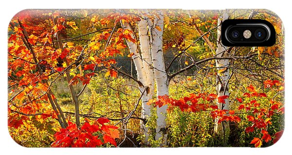 Autumn Scene With Red Leaves And White Birch Trees, Nova Scotia IPhone Case
