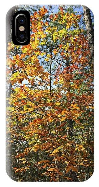 Autumn Sunday IPhone Case