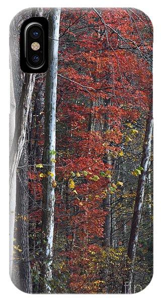 Autumn Trees 8261c IPhone Case