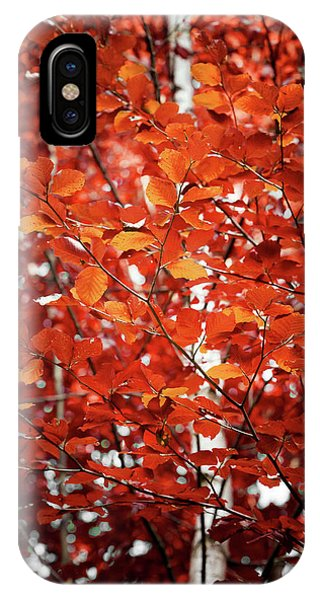 Autumn Triumph IPhone Case