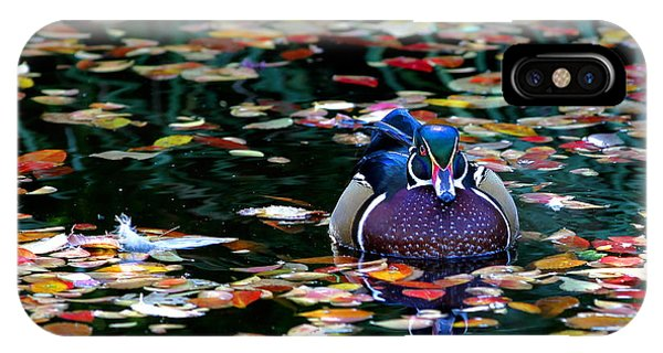 Autumn Wood Duck IPhone Case