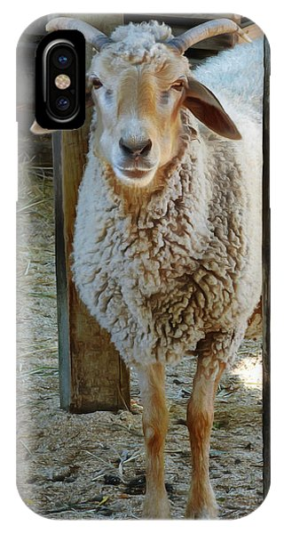 Awassi Sheep IPhone Case