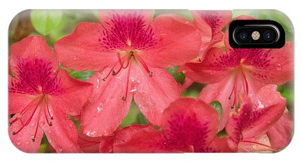 Azalea Blossoms IPhone Case
