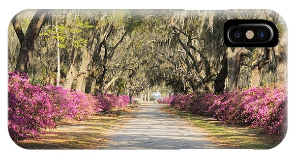 azalea lined road in Spring IPhone Case