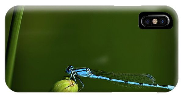 Azure Damselfly-coenagrion Puella IPhone Case