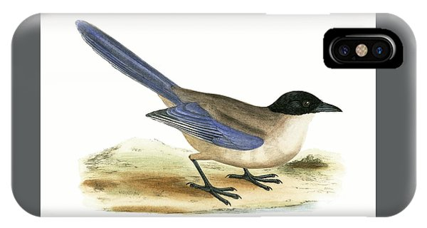 Azure Winged Magpie IPhone Case