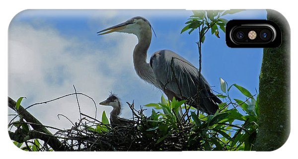 Baby And Mom Great Blue Heron IPhone Case