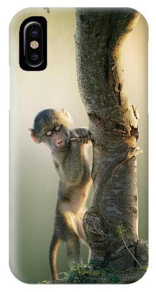 Foliage iPhone Case - Baby Baboon In Tree by Johan Swanepoel