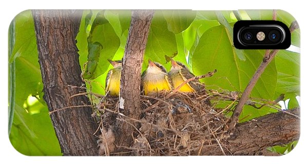 Baby Birds Waiting For Mom IPhone Case