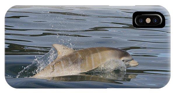 Baby Bottlenose Dolphin - Scotland  #35 IPhone Case