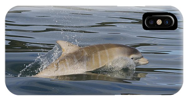 Baby Bottlenose Dolphin - Scotland  #35 IPhone Case