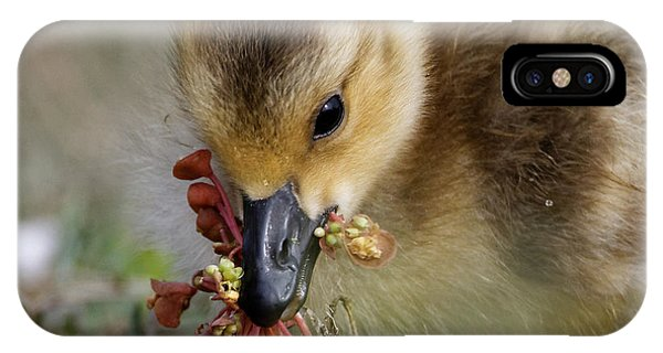 Baby Chick With Water Flowers IPhone Case