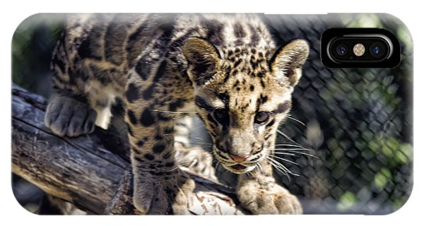 Baby Clouded Leopard IPhone Case