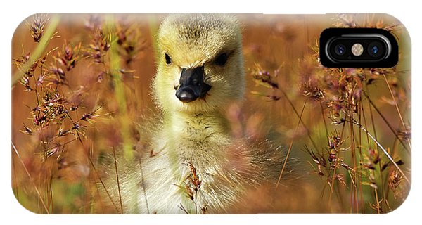Baby Cuteness - Young Canada Goose IPhone Case