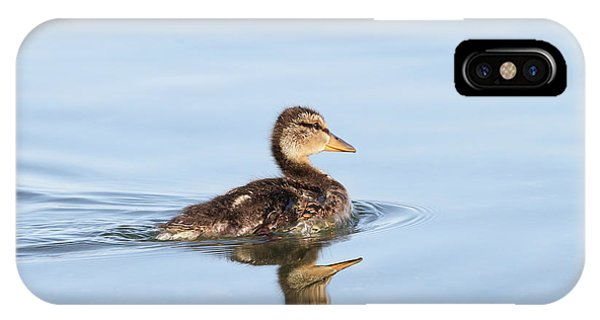 IPhone Case featuring the photograph Baby Duckling by Jackson Pearson
