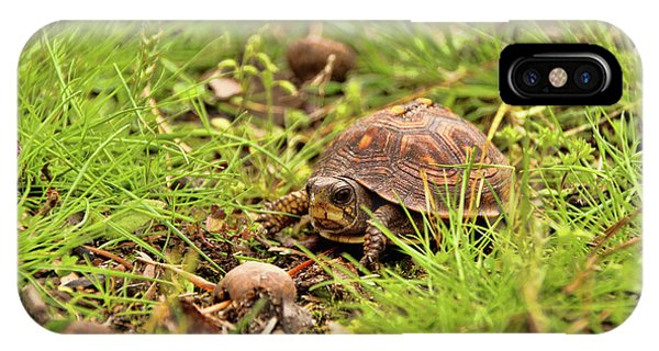 Baby Eastern Box Turtle IPhone Case