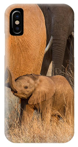 Baby Elephant 2 IPhone Case