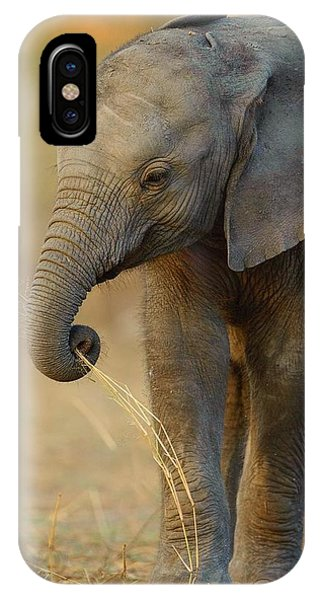 Baby Elephant IPhone Case
