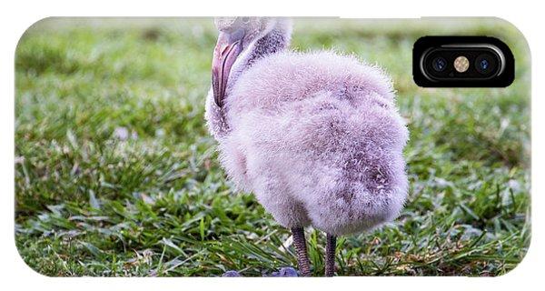 Baby Flamingo Sitting IPhone Case