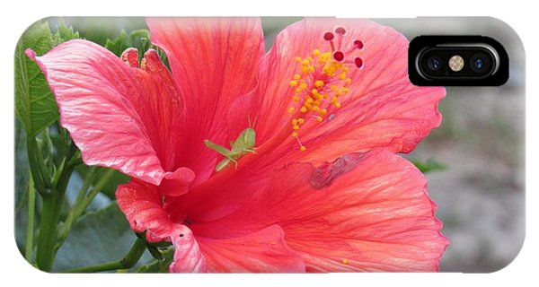IPhone Case featuring the photograph Baby Grasshopper On Hibiscus Flower by Nancy Nale