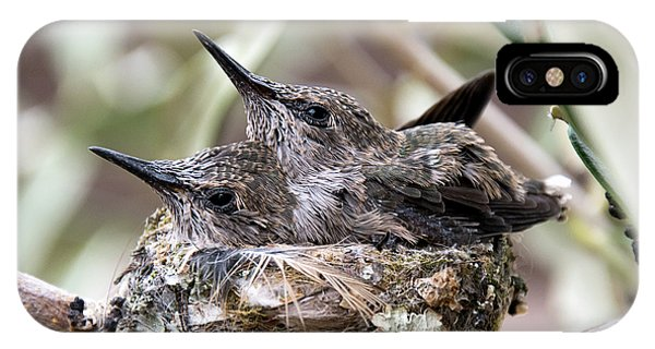 Baby Hummingbirds Outgrowing Their Nest IPhone Case