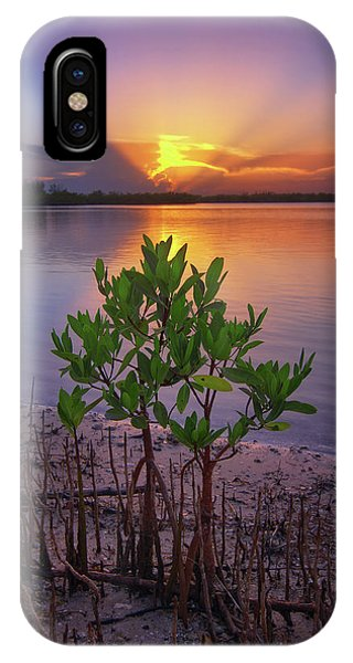Baby Mangrove Sunset At Indian River State Park IPhone Case