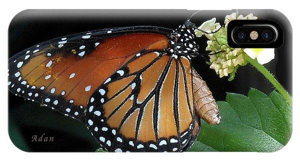 Baby Monarch Macro IPhone Case