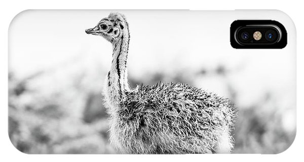 IPhone Case featuring the photograph Baby Ostrich Black And White by Tim Hester